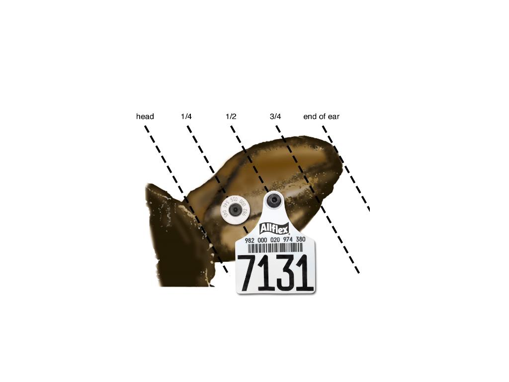 RFID žymės gyvūnams